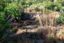 Damage to woodlands from Feral pigs rooting